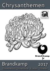 Brandkamp_low_Seite_01.png