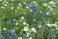 Mini-Blumenteppiche bis 40 cm hoch