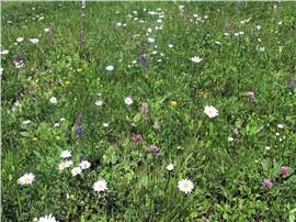 BOKU-Blumenrasen:   Das Ergebnis eines mehrjährigen Forschungsprojektes der Universität für Bode