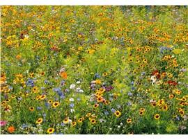 Honig & Schmetterling:   Diese Mischung wurde in Zusammenarbeit mit Entomologen und Bienenzüchtern au
